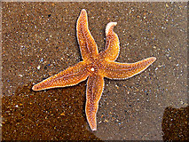 Star fish 213x160 One starfish at a time
